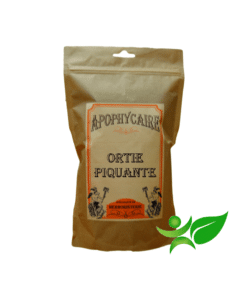 infusion ortie