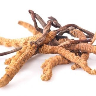 Cordyceps (Yarsagumba) en poudre 100 gr
